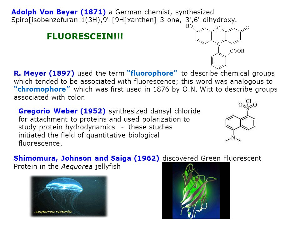 Adolph Von Beyer (1871) a German chemist, synthesized Spiro[isobenzofuran-1(3H),9 -[9H]xanthen]-3-one, 3 ,6 -dihydroxy.